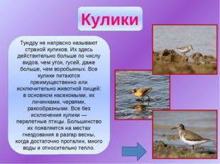 Из пестрого, богатого видами отряда куриных только два вида встречаются в наш