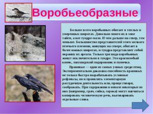 Чаек называют околоводными птицами. Действительно, чаще всего их можно встре