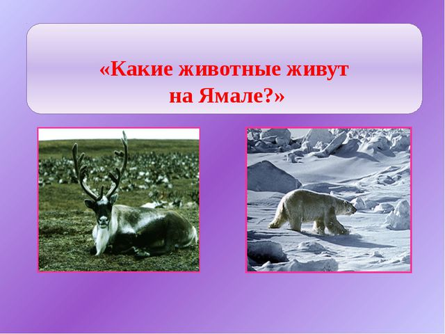 Животные Ямала