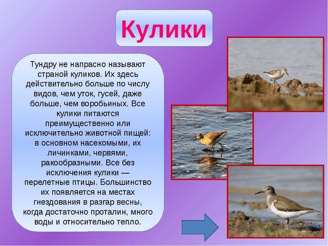 Из пестрого, богатого видами отряда куриных только два вида встречаются в наш...