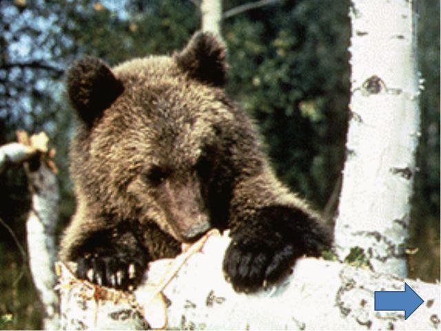 Насекомые составляют около 80% всех животных на Земле. Известно более 1 млн....