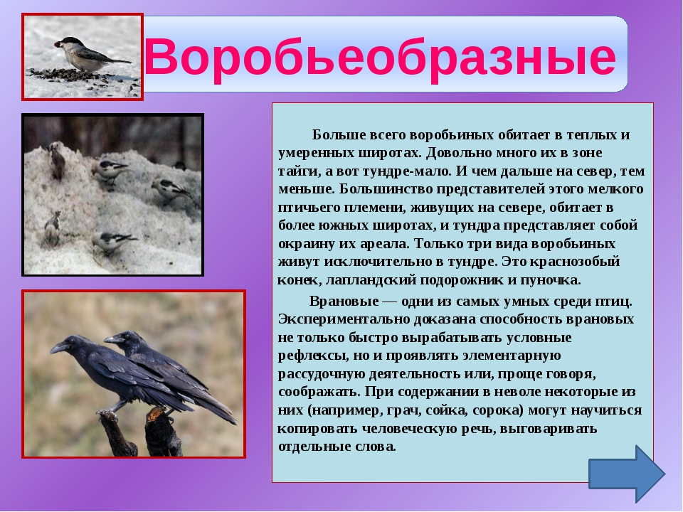 Чаек называют околоводными птицами. Действительно, чаще всего их можно встре...