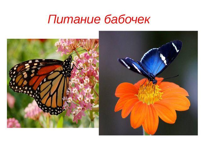 Питание бабочек