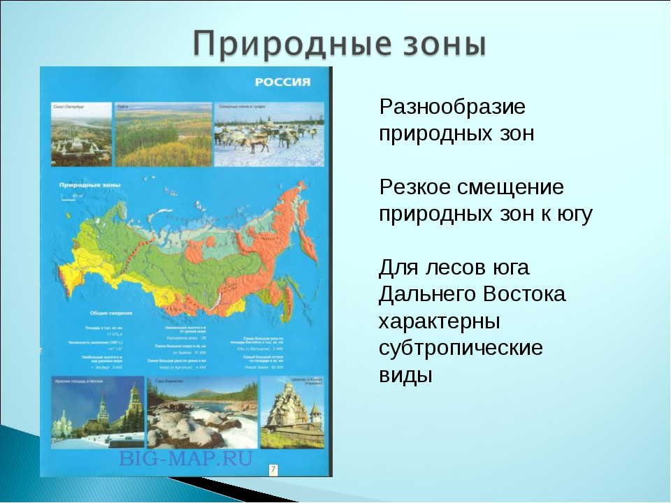 Разнообразие природных зон Резкое смещение природных зон к югу Для лесов юга...