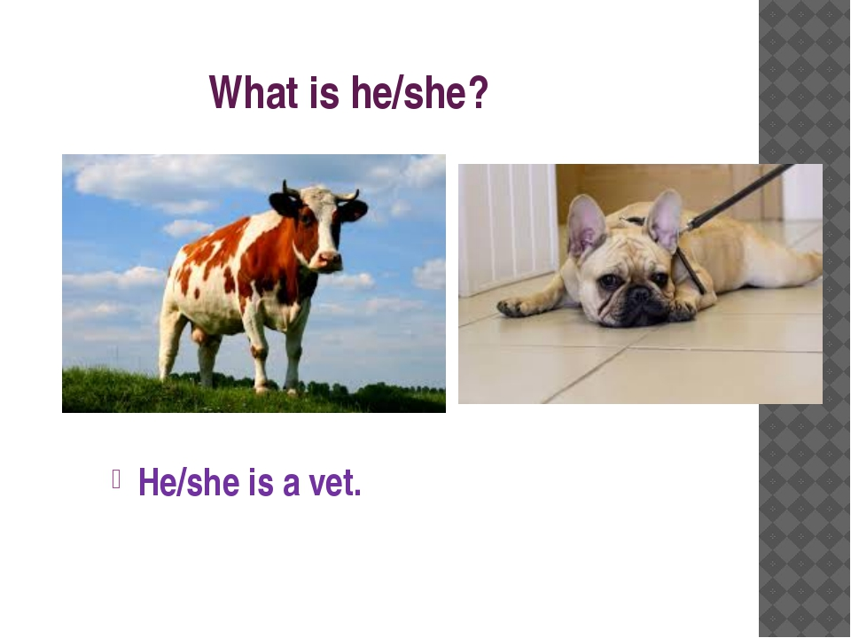 What is he/she? He/she is a vet.