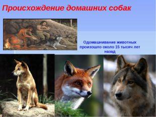 Происхождение домашних собак Одомашнивание животных произошло около 15 тысяч