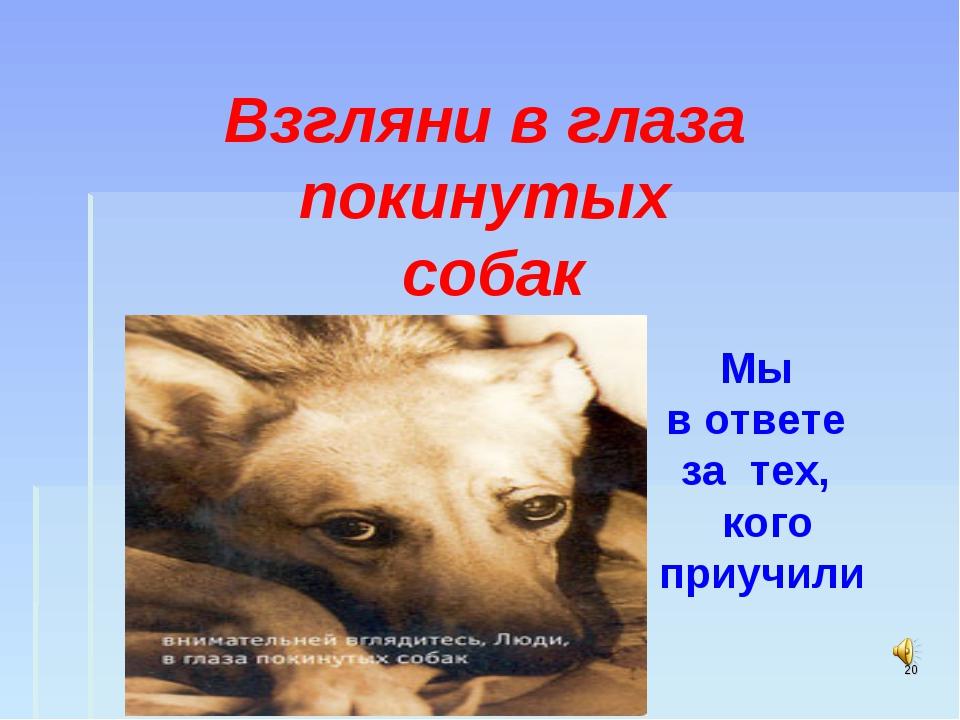 * Мы в ответе за тех, кого приучили Взгляни в глаза покинутых собак