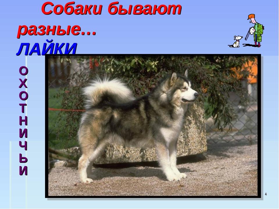 ОХОТНИЧЬИ * Собаки бывают разные… ЛАЙКИ