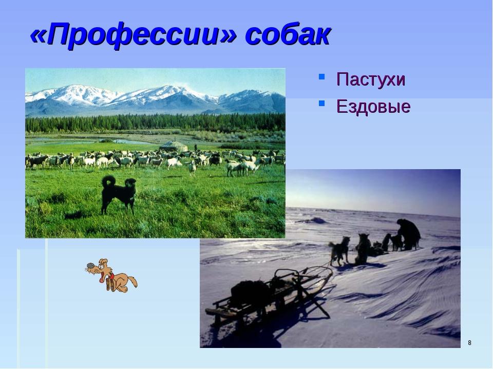 «Профессии» собак Пастухи Ездовые *
