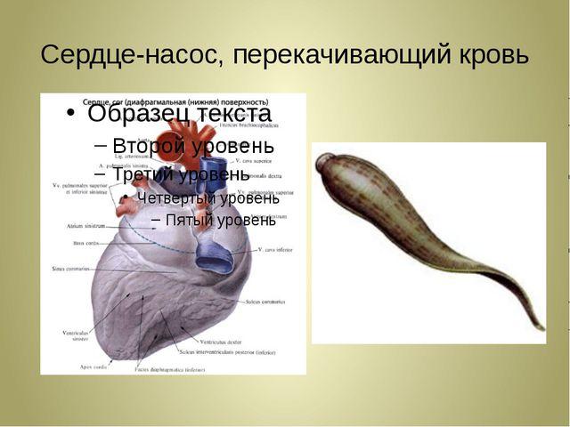Сердце-насос, перекачивающий кровь