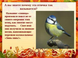 А вы знаете почему эта птичка так называется? Название «синица» произошло вов