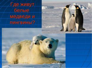 Где живут белые медведи и пингвины?