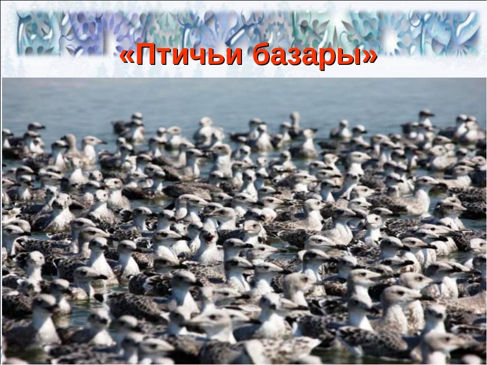 «Птичьи базары»