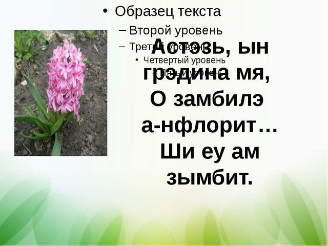 Астэзь, ын грэдина мя, О замбилэ а-нфлорит… Ши еу ам зымбит.