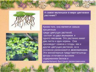 А самое маленькое в мире цветковое растение? Кроме того, она является самым к