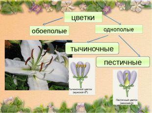 цветки однополые обоеполые тычиночные пестичные