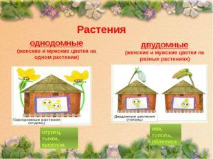 Растения однодомные (женские и мужские цветки на одном растении) двудомные (ж