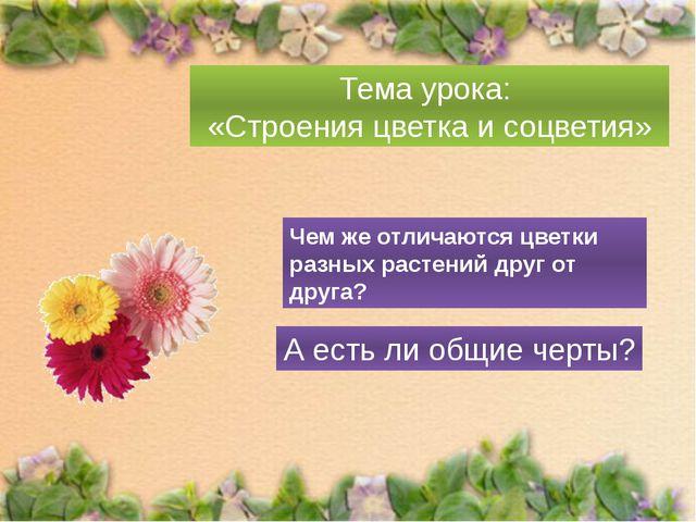 Тема урока: «Строения цветка и соцветия» Чем же отличаются цветки разных рас...