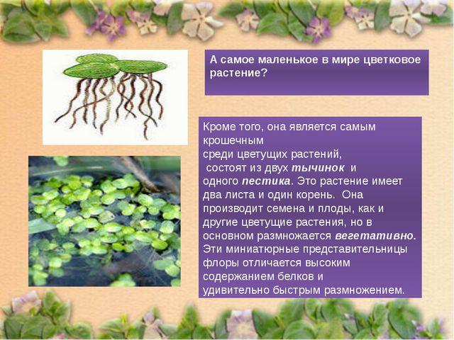 А самое маленькое в мире цветковое растение? Кроме того, она является самым к...