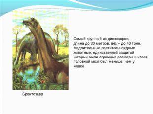 Бронтозавр Самый крупный из динозавров, длина до 30 метров, вес – до 40 тонн.