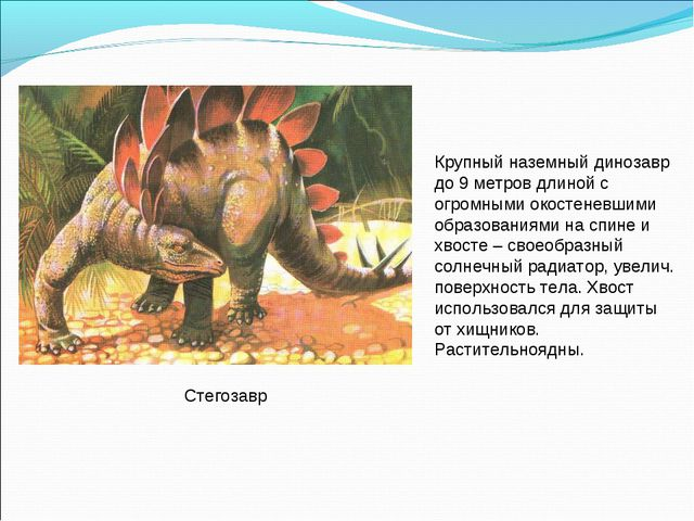 Стегозавр Крупный наземный динозавр до 9 метров длиной с огромными окостеневш...