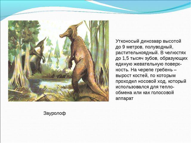 Зауролоф Утконосый динозавр высотой до 9 метров, полуводный, растительноядный...