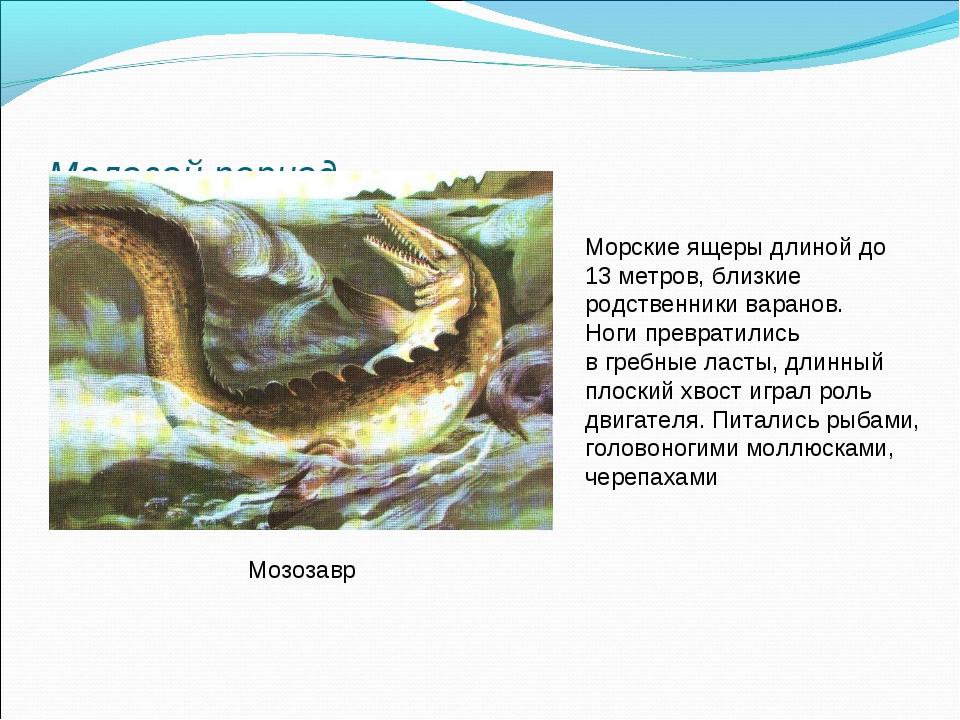 Меловой период Мозозавр Морские ящеры длиной до 13 метров, близкие родственни...