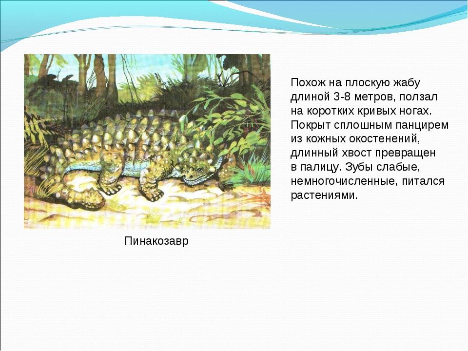 Пинакозавр Похож на плоскую жабу длиной 3-8 метров, ползал на коротких кривых...