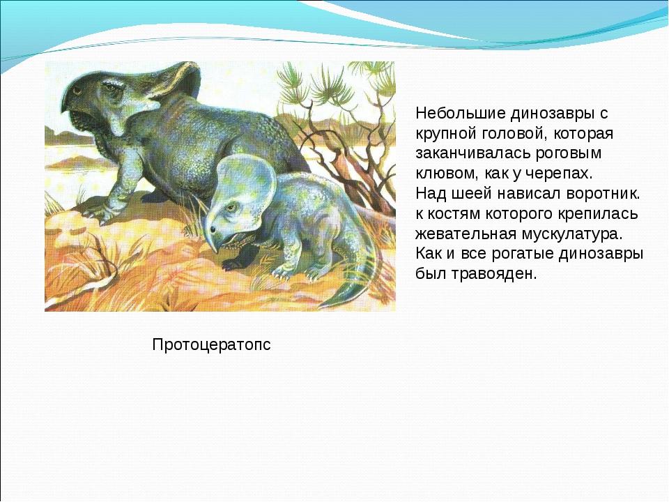 Протоцератопс Небольшие динозавры с крупной головой, которая заканчивалась ро...