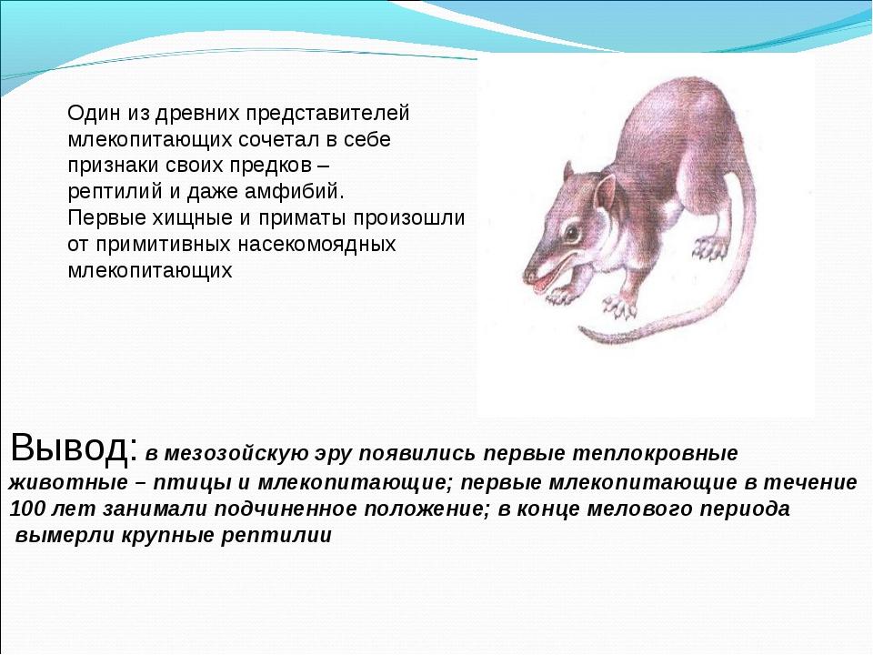 Один из древних представителей млекопитающих сочетал в себе признаки своих пр...
