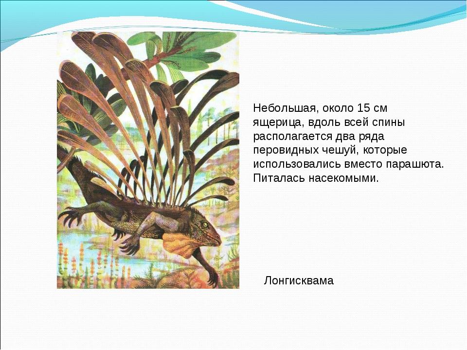 Небольшая, около 15 см ящерица, вдоль всей спины располагается два ряда перов...