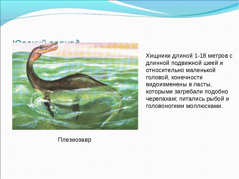 Юрский период Плезиозавр Хищники длиной 1-18 метров с длинной подвижной шеей...