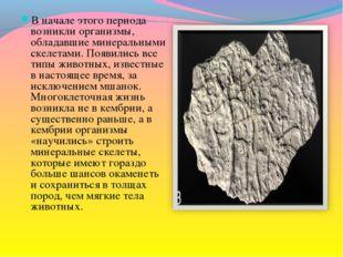 В начале этого периода возникли организмы, обладавшие минеральными скелетами.