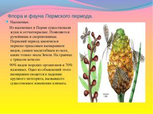 Флора и фауна Пермского периода. Насекомые. Из насекомых в Перми существовали