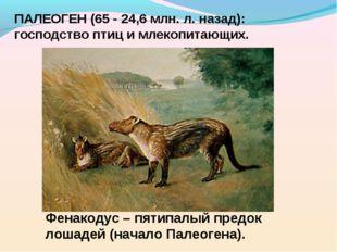 ПАЛЕОГЕН (65 - 24,6 млн. л. назад): господство птиц и млекопитающих. Фенакоду