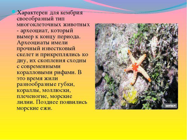 Характерен для кембрия своеобразный тип многоклеточных животных - археоциат,...
