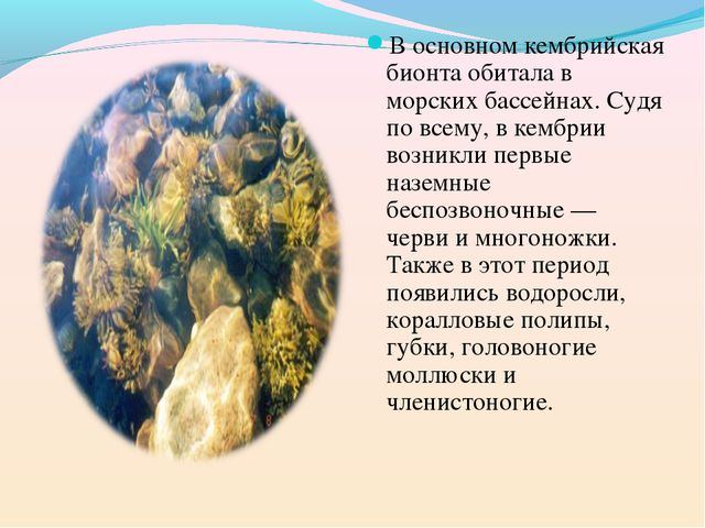 В основном кембрийская бионта обитала в морских бассейнах. Судя по всему, в к...