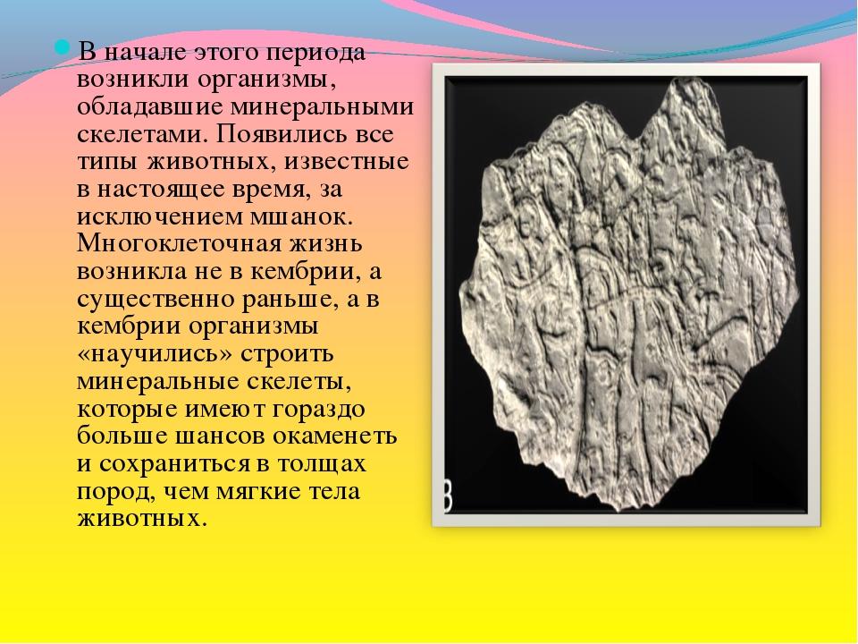 В начале этого периода возникли организмы, обладавшие минеральными скелетами....