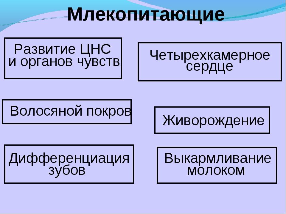 Млекопитающие Развитие ЦНС и органов чувств Волосяной покров Живорождение Чет...