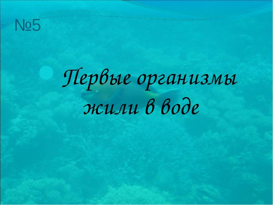 №5 Первые организмы жили в воде