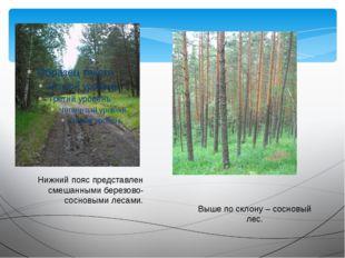 Нижний пояс представлен смешанными березово-сосновыми лесами. Выше по склону