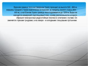 Верхняя граница леса на Северном Урале проходит на высоте 500 - 800 м, вершин