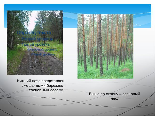 Нижний пояс представлен смешанными березово-сосновыми лесами. Выше по склону...