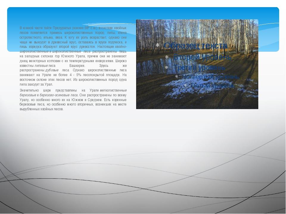 В южной части тайги Предуралья (южнее 58° c.ш.) в составе хвойных лесов появл...