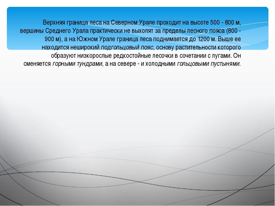 Верхняя граница леса на Северном Урале проходит на высоте 500 - 800 м, вершин...