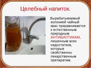 Целебный напиток. Вырабатываемый колонией чайный квас приравнивается к естест
