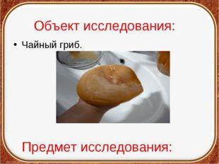 Объект исследования: Чайный гриб. Предмет исследования: Целебные свойства гри