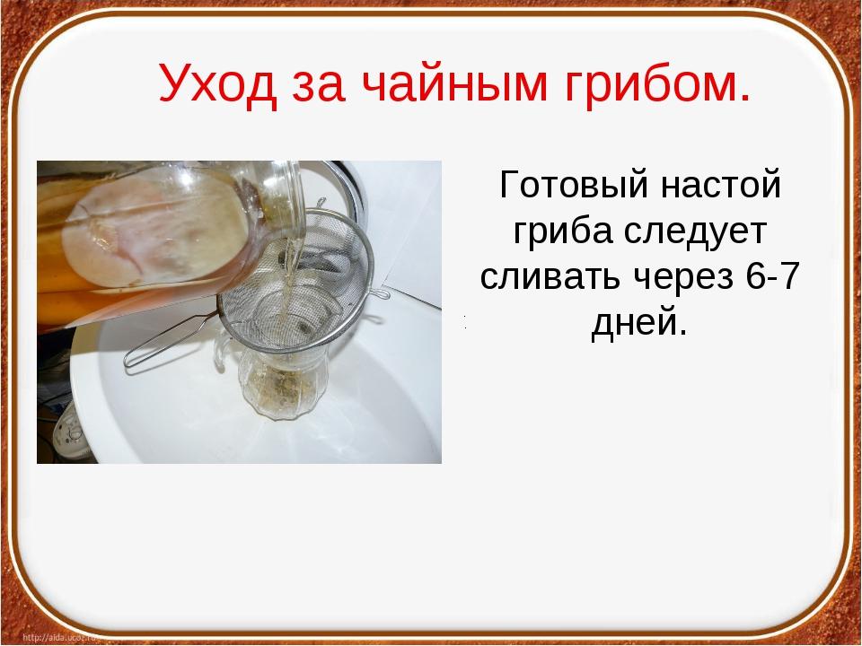 Уход за чайным грибом. Готовый настой гриба следует сливать через 6-7 дней....