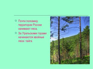 Почти половину территории России занимают леса. За Уральскими горами начинают
