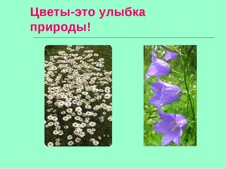 Цветы-это улыбка природы!